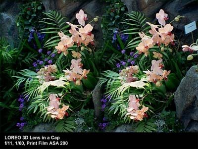 3D Lens in a Cap sample photo